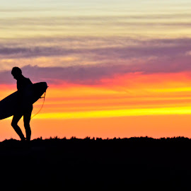 Surfing at Sunset by Stephanie Tyson - Sports & Fitness Surfing ( surfing, sunset, silhouette, california, santa cruz, surf,  )