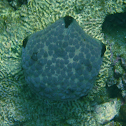 Pillow Cushion Star