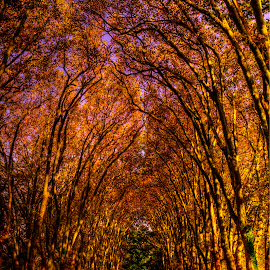 by Paulo Soares - Nature Up Close Trees & Bushes ( dramatic landscapes, , fall, color, colorful, nature )