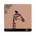 Aviary Effects: Viewfinder APK baixar