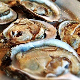 Blue Point Oysters in Long Island by Katie Cook - Food & Drink Meats & Cheeses