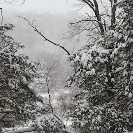 Ozark Christmas by DL Turner - Landscapes Mountains & Hills ( mountain, winter, snow, trees )