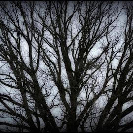 by Lori Kulik - Nature Up Close Trees & Bushes
