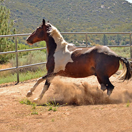 by Michelle Hunt - Animals Horses ( horses )