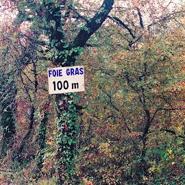 Foie Gras by Timothy Carney - Landscapes Travel ( sign, autumn, france, foie gras, rural, auvergne )