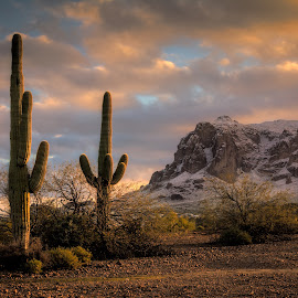 Sunrise in the desert with snow by Joe Neely - Landscapes Mountains & Hills ( superstition mountains, desert sunrise, first light of 2015, snow in the desert, sunrise, saguaro )