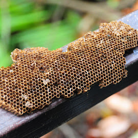 by Shahrul Izzat - Nature Up Close Hives & Nests