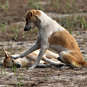 Wake up brother and come for playing by Subrata Sarkar - Animals - Dogs Playing ( nature, dog playing, dog, animal )