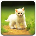 Cute little Cat  Full Theme icon