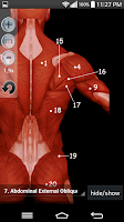 Screenshot of Anatomy Muscles