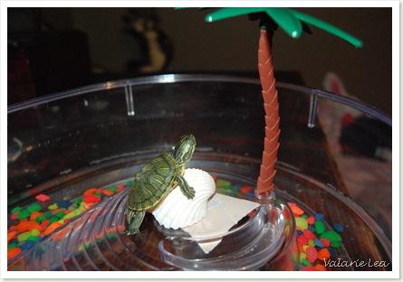 turtle012
