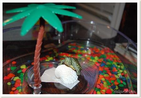 turtle011
