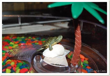 turtle010