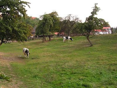 Pastvina v širším centru Prahy