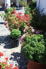 Santorini 2008 081