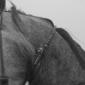 Horse by Junaid Gujjar - Animals Horses ( event, an, horse, in, closeup, dessert,  )