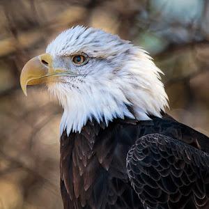 Eagle-1-3.jpg