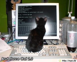hacker_cat