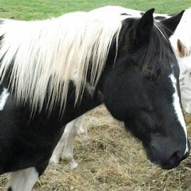 by Ivka Njegac - Animals Horses (  )