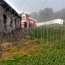 Serene Farm's View From Nature's Eyes by Abby Bagwell - Nature Up Close Webs