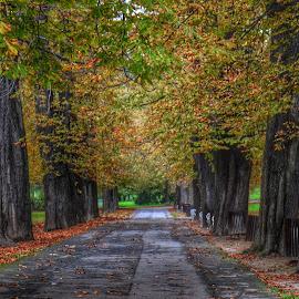 neskončna pot v mestnem parku by Boris Radevski - Nature Up Close Trees & Bushes ( forest )