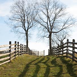 by Brian Butters - Landscapes Prairies, Meadows & Fields ( farm, antietam, winter, afternoon, civil war, maryland, trees, fences, usa, sharpsburg, shadows )