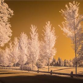 Fairy tale by Eva Krejci - City,  Street & Park  Street Scenes ( infrared, doad, trees, shade, light, mono )