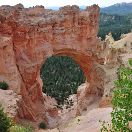 by Steven Calhoun - Landscapes Caves & Formations ( national park, arch, rock formations, landscape, bryce canyon )