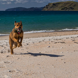by Rick Lussi - Animals - Dogs Running