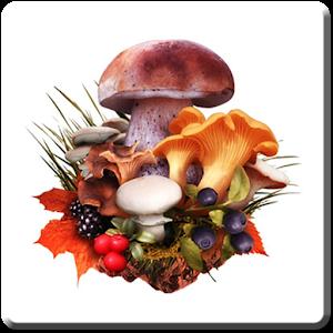 Cover art The Mushroom Navigator (FULL)