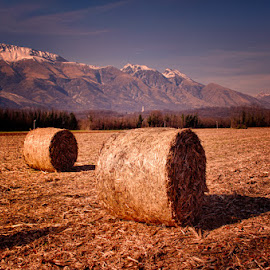 Sheaves by Luigi Esposito - Landscapes Prairies, Meadows & Fields ( grassland, mountains, prairies, hay, sheaves )