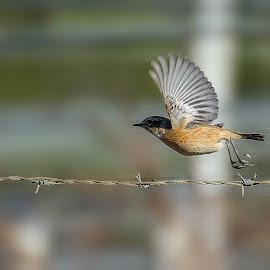 Sparrow by Cristian Peša - Animals Birds