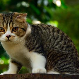 by Neni Wijaya - Animals - Cats Portraits
