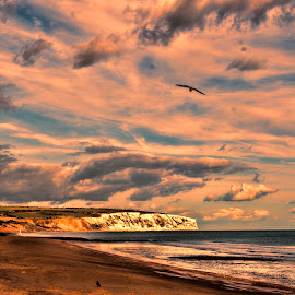 Sunset over Culver by Kelly Murdoch - Landscapes Sunsets & Sunrises ( clouds, bird, sand, sky, ztam photography, sunset, sea, culver, isle of wight, beach, sandown, colours, , landscape )
