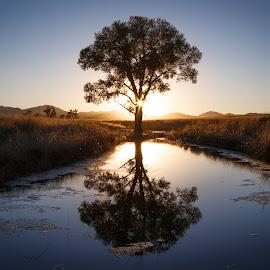 San Rafael Valley by Gannon McGhee - Landscapes Prairies, Meadows & Fields ( reflection, rafael, san, tree, sunset, arizona, valley )