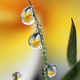 :: my dews :: by Dedy Haryanto - Nature Up Close Natural Waterdrops