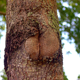 The Nude Tree by Elfie Back - Nature Up Close Trees & Bushes ( tree, pine tree, branch, forest,  )