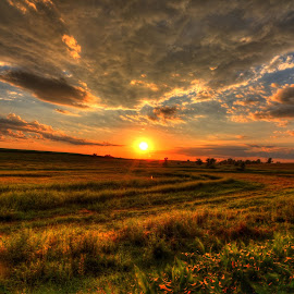 Summertime in the heartland by Casey Mitchell - Landscapes Prairies, Meadows & Fields (  )