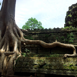 Nature and Manmade by Subashni Sandrison - Nature Up Close Trees & Bushes ( temple, ta phrom, asia, cambodia, siem reap )