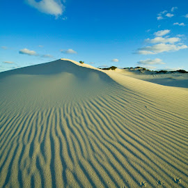 Footprints in the sand by Mike O'Connor - Landscapes Deserts ( bird, sand, footprints, dune, tracks, ripple marks )