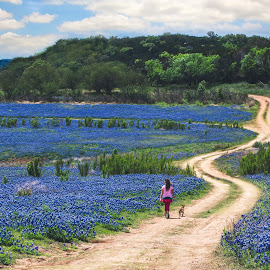 The Blue Path by Kelley Ahr - Landscapes Prairies, Meadows & Fields ( april 2014, bluebonnets )