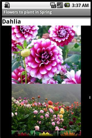 Flower Guide - Summer Spring