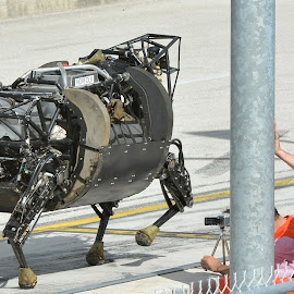 Robo cow by Terry Barker - News & Events Technology ( robo cow,  )