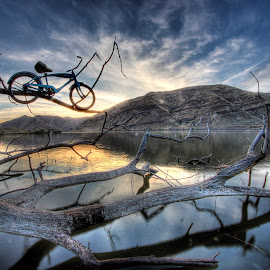 Branching Out by Eric Demattos - Transportation Bicycles ( reflection, sunset, blue bike, branch, evening, limb, river )