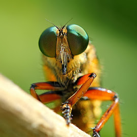 facet face by Genta Ariawan - Animals Insects & Spiders ( macro, nature, nature up close, like, insect )