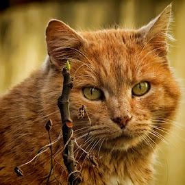 yellow by Dunja Kolar - Animals - Cats Portraits ( croatia, zagreb, yellow )