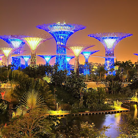Night at Supertree Grove by Daniel Aw - Landscapes Travel ( supertree, skyway, garden., bridge, singapore )
