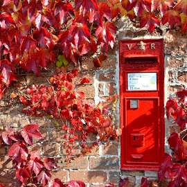 Red Letter Day by Duane Jones - Buildings & Architecture Other Exteriors ( cheshire, letter box. post box, red, https://www.flickr.com/photos/91454795@n06/, https://www.facebook.com/pages/duane-jones-photos/589299761174502, ivy )
