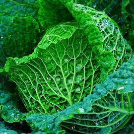 Curled Up by Leigh Martin - Nature Up Close Gardens & Produce ( green water drops vegetable,  )