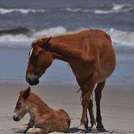 I'm not awake yet Mom! by Maggie Smith - Animals Horses ( animals, horses, baby animals. )